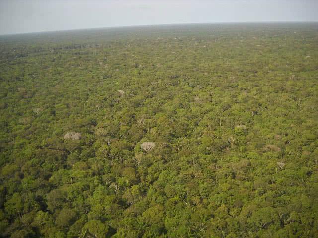 جنگل های بارانی آمازون