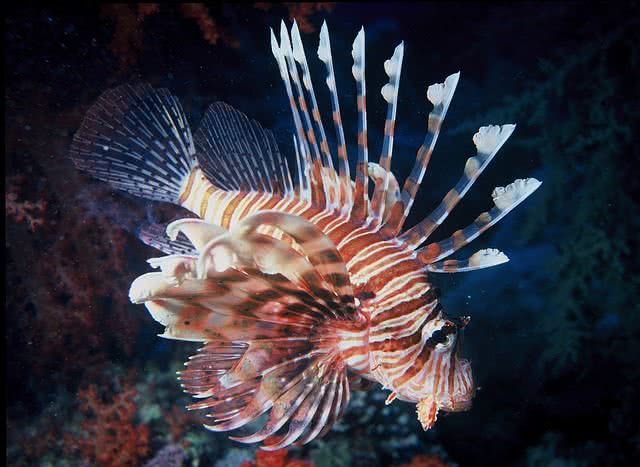 Top 10 Most Beautiful Fishes In The World The Mysterious