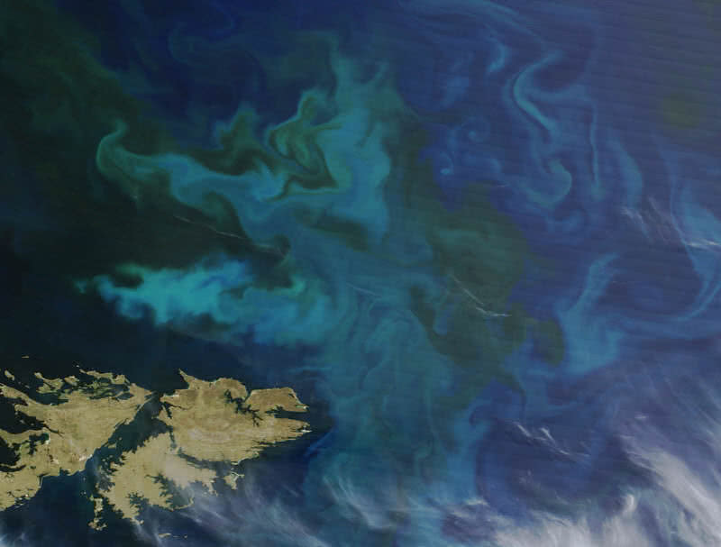 Phytoplankton Blooms