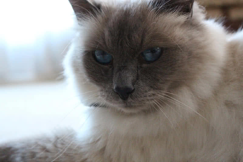 Top  Most Beautiful Cats In The World
