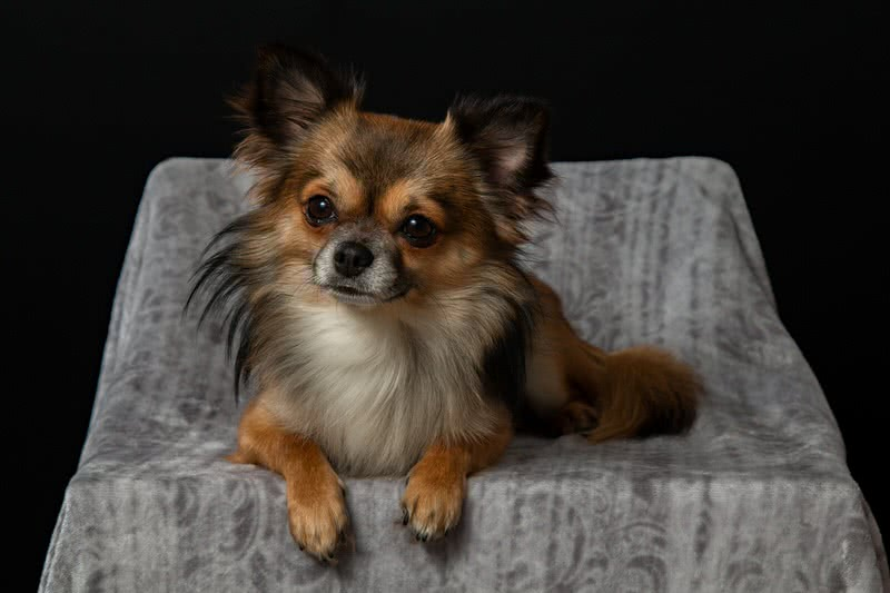 Dog Breeds For Apartment Living