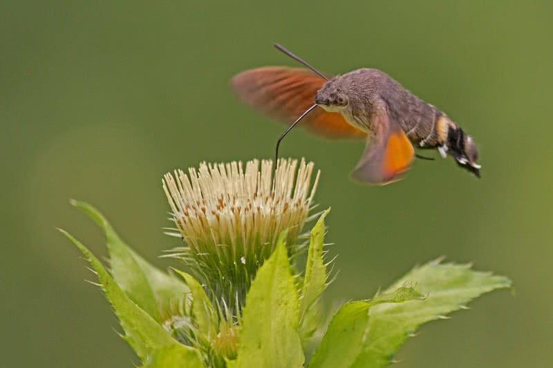 عجیب ترین حشرات