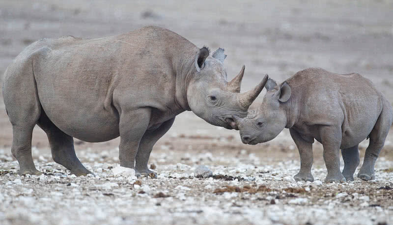 10 Animals That Have Gone Extinct In The Past Decade